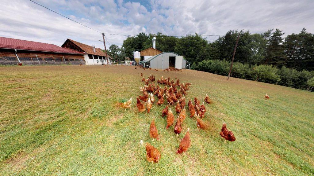 Freiland Hühner der Familie Lambauer in Preding 360 Grad Panoramabild